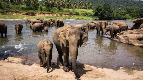 品納維拉大象孤兒院