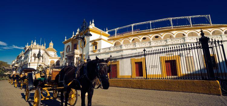 Plaza de toros de la Real Maestranza de Caballería de Sevilla3
