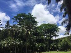 庞普勒斯植物园-毛里求斯-_CFT01****6255764