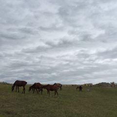 托乎拉蘇草原用戶圖片