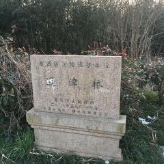 Shanghai Tongjin Bridge User Photo