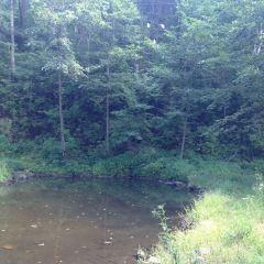 小東溝原始森林用戶圖片