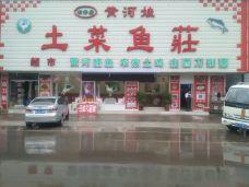 黄河娃土菜鱼庄-吉县-M23****804