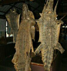 Siem Reap Crocodile Farm User Photo