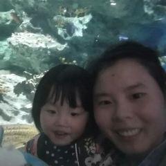 Chengdu Haichang Polar Ocean Park User Photo