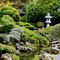 Japanese Tea Garden User Photo