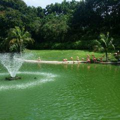Jungle Island User Photo
