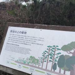 사쿠라지마 섬 여행 사진