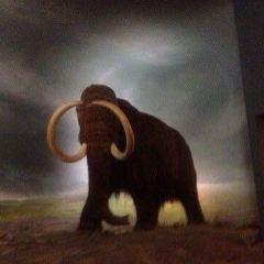 皇家不列顛哥倫比亞省博物館用戶圖片