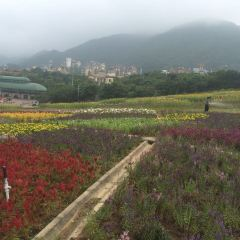 Eastern Huaqiao Cheng Tea Valley User Photo