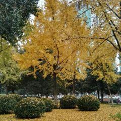 鳩茲廣場用戶圖片