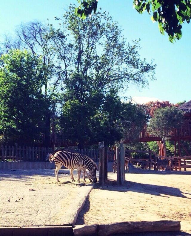 마드리드 동물원 수족관