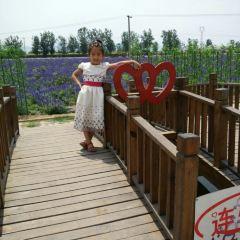즈하이 라벤더공원 여행 사진