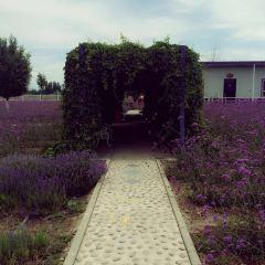 伊帕爾汗薰衣草觀光園用戶圖片
