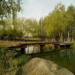 雪楓公園用戶圖片