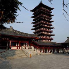 紫蓬山國家森林公園用戶圖片