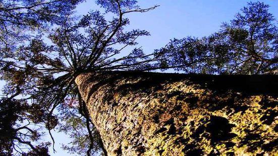 金秀銀杉森林公園