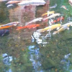 플라밍고 야생 서식지 여행 사진