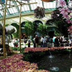 Bellagio Conservatory and Botanical Gardens User Photo