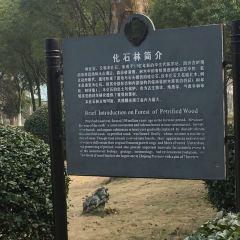 天都城·歡樂四季公園用戶圖片