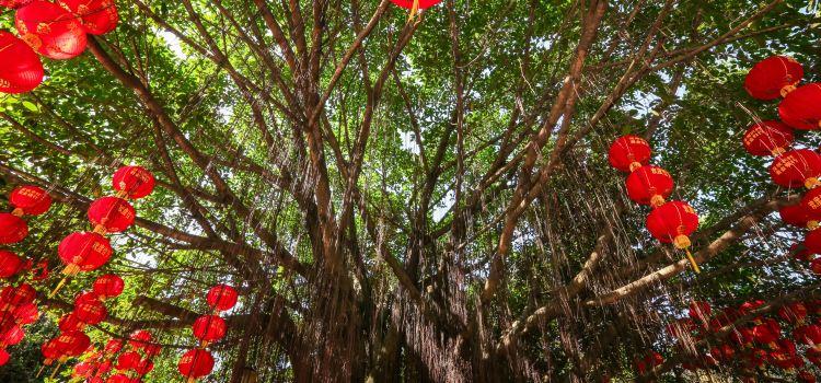 Shenzhen Mangrove Nature Reserve2