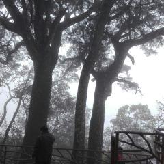 吊羅山國家森林公園用戶圖片