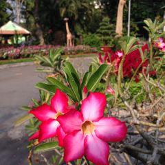 Botanical Gardens (Vuon Bach Thao) User Photo