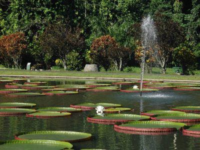 보고르 식물원