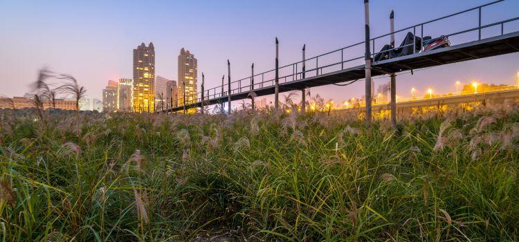 Hankou Riverside Reeds1