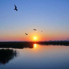 Longfeng Wetland User Photo