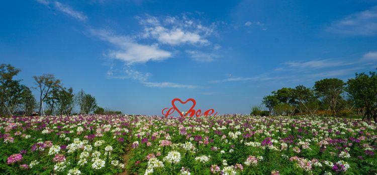 Zhoupu Sea of Flowers1