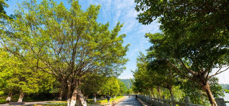 Dafu Mountain Forest Park2