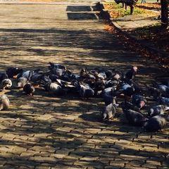 ソウル色公園のユーザー投稿写真
