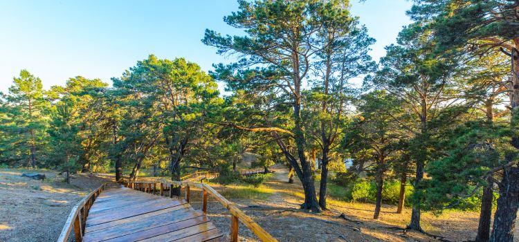 Hailar National Forest Park1