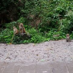 張家界国家森林公園のユーザー投稿写真