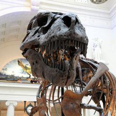 Museum Campus User Photo