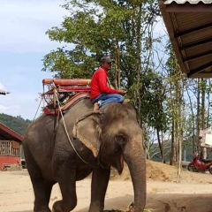 Pattaya Elephant Village User Photo