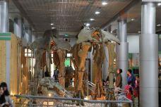北京自然博物馆-北京-威米