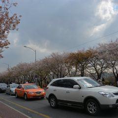 Yeouido User Photo