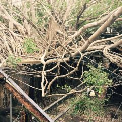Anping Tree House User Photo