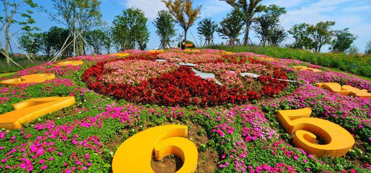 Zhoupu Sea of Flowers