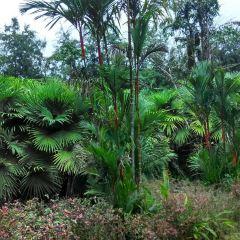 Xinglong Tropical Garden User Photo