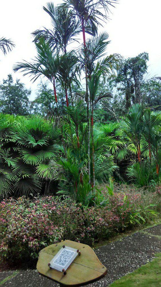 Xinglong Tropical Garden