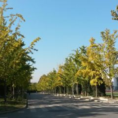칭화대학(청화대학) 여행 사진
