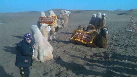 駝鈴夢坡沙漠生態景区