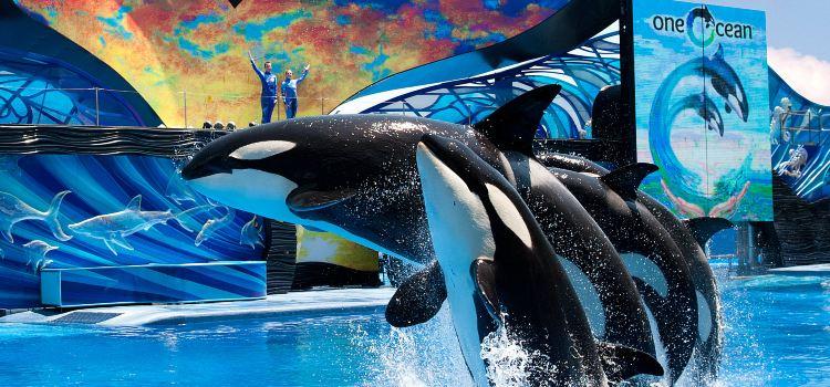 SeaWorld Orlando1