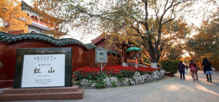 紅山公園2