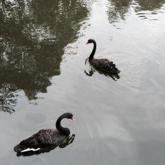 レイ湖中央公園のユーザー投稿写真