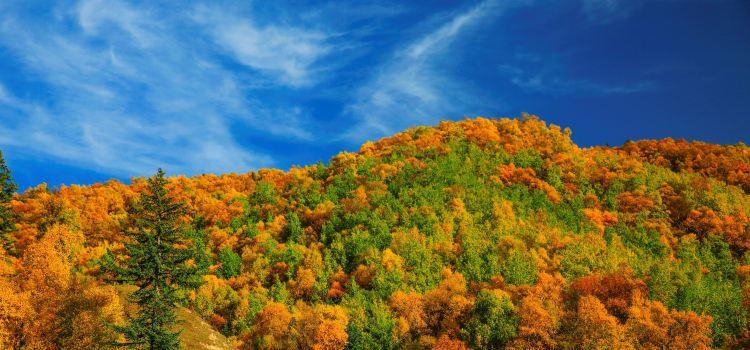 Kanbula National Forest Park3