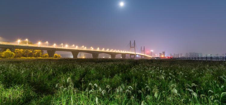 Hankou Riverside Reeds